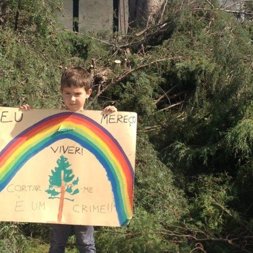 Corte de árvores gera polémica em Travanca de Lagos (com áudio)