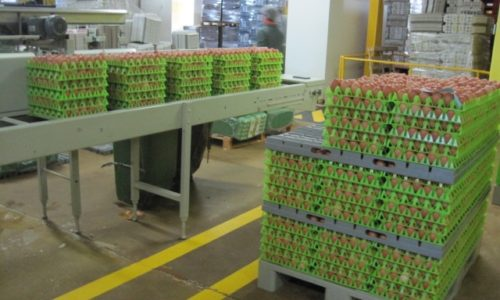 Pombal: ASAE apreende 50 mil ovos porirregularidades na rotulagem