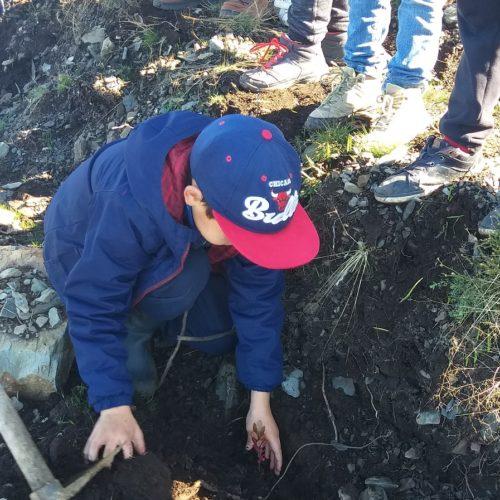 Crianças plantaram árvores oferecidas pela Worten e ERP Portugal ao Município de Oliveira do Hospital
