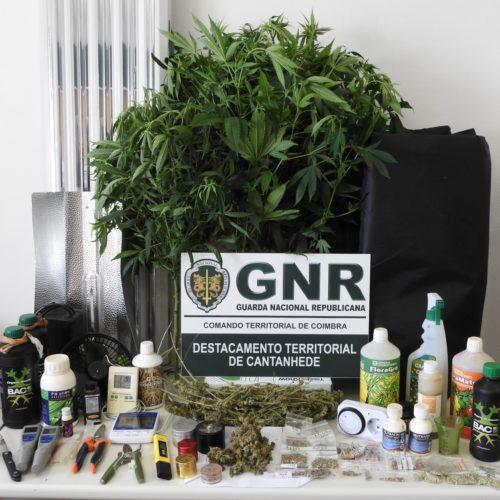 Cantanhede: Homem detido por tráfico de estupefacientes