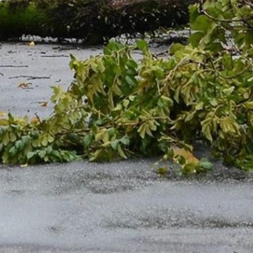 Dezenas de quedas de árvores em oito distritos do continente