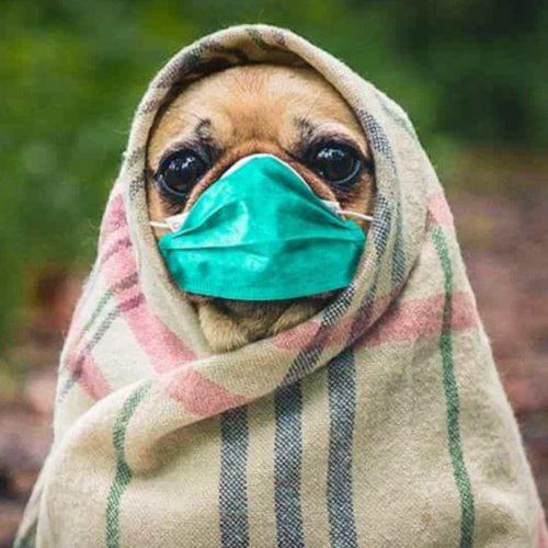 """GNR apela: """"Não abandone os animais, eles não transmitem o vírus"""""""
