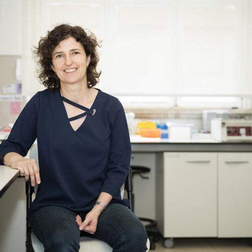 Mais de 3 milhões de euros para investigar doenças do cérebro e envelhecimento cardiovascular na Universidade de Coimbra