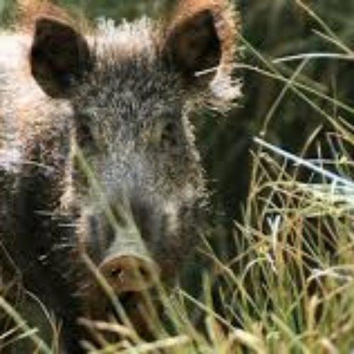 Agricultores de Coimbra exigem controlo de animais que destroem culturas