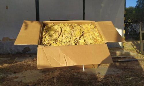 Região: GNR apreendeu 100 quilos de folha de tabaco