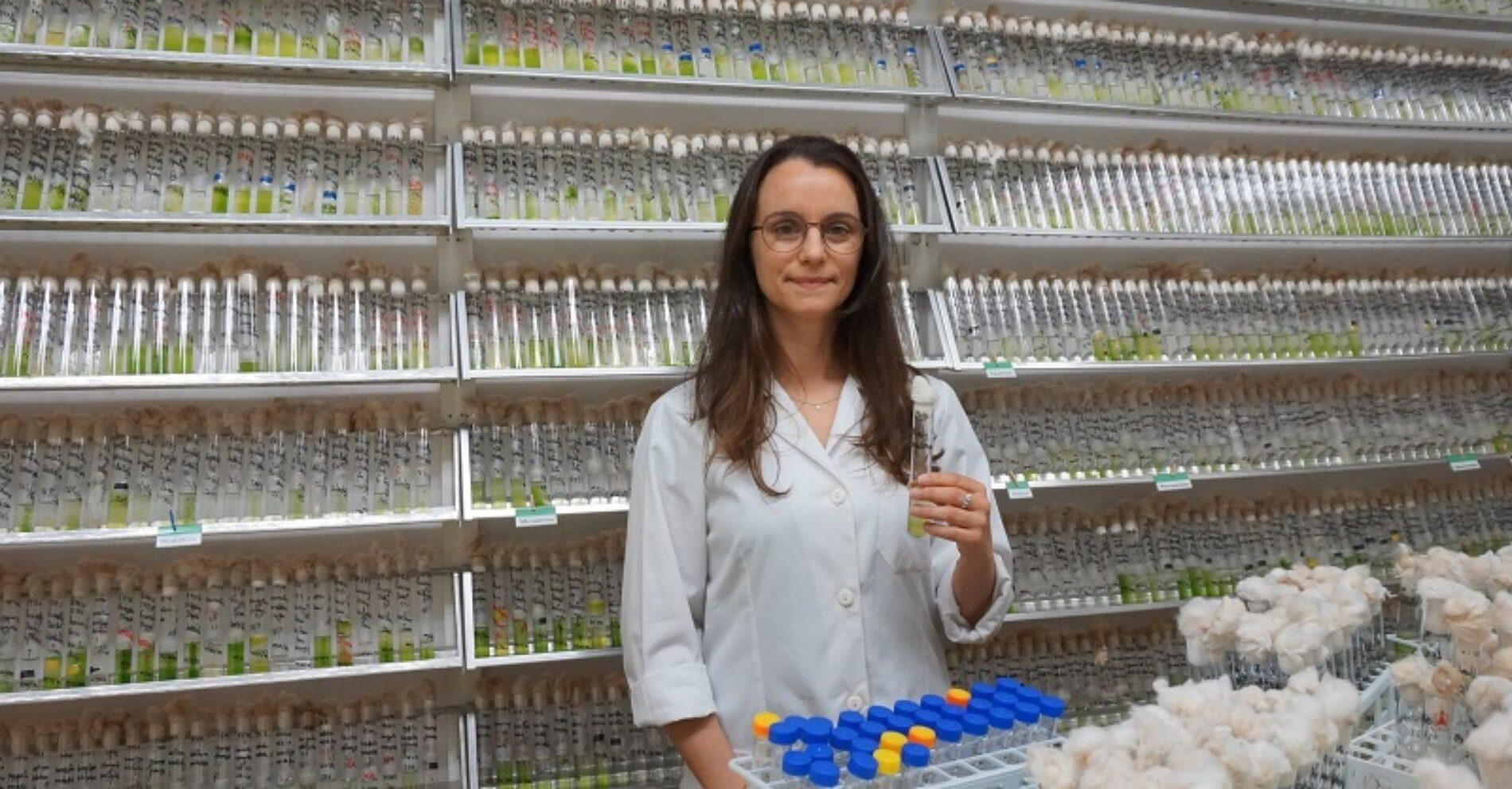 Universidade de Coimbra: Investigadores descobrem nova família de microalgas de água doce